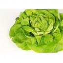 Salata verd